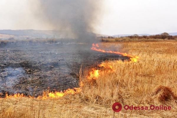 За сутки в Одесской области спасатели 21 раз тушили сухую траву и камыш