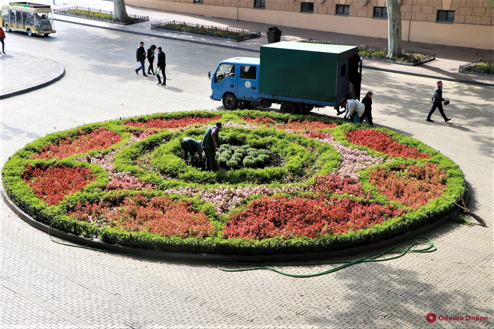 Одессу украсят двумя тысячами хризантем