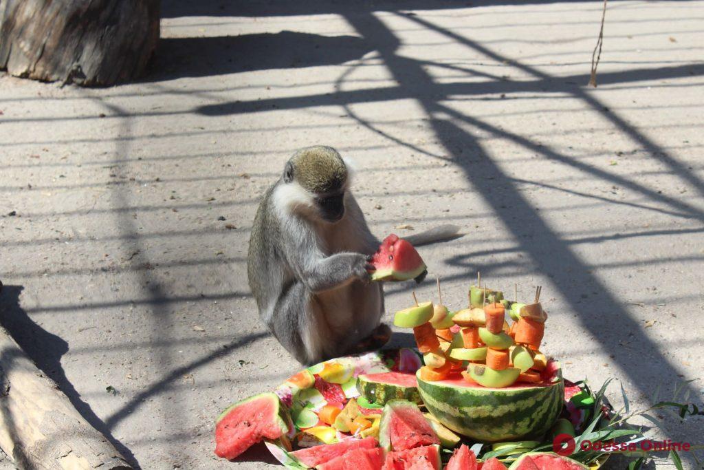 Одесский зоопарк отметил 97-летие (фото)
