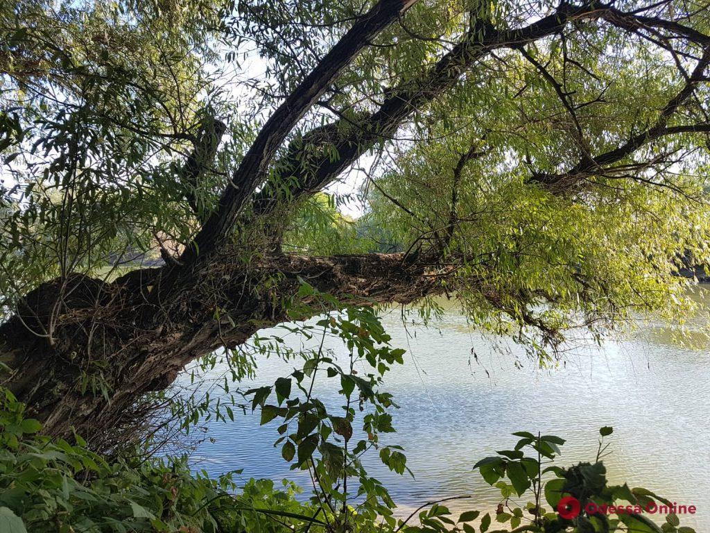 Красивые и романтические места в Одесской области: остров на реке Турунчук (фоторепортаж)