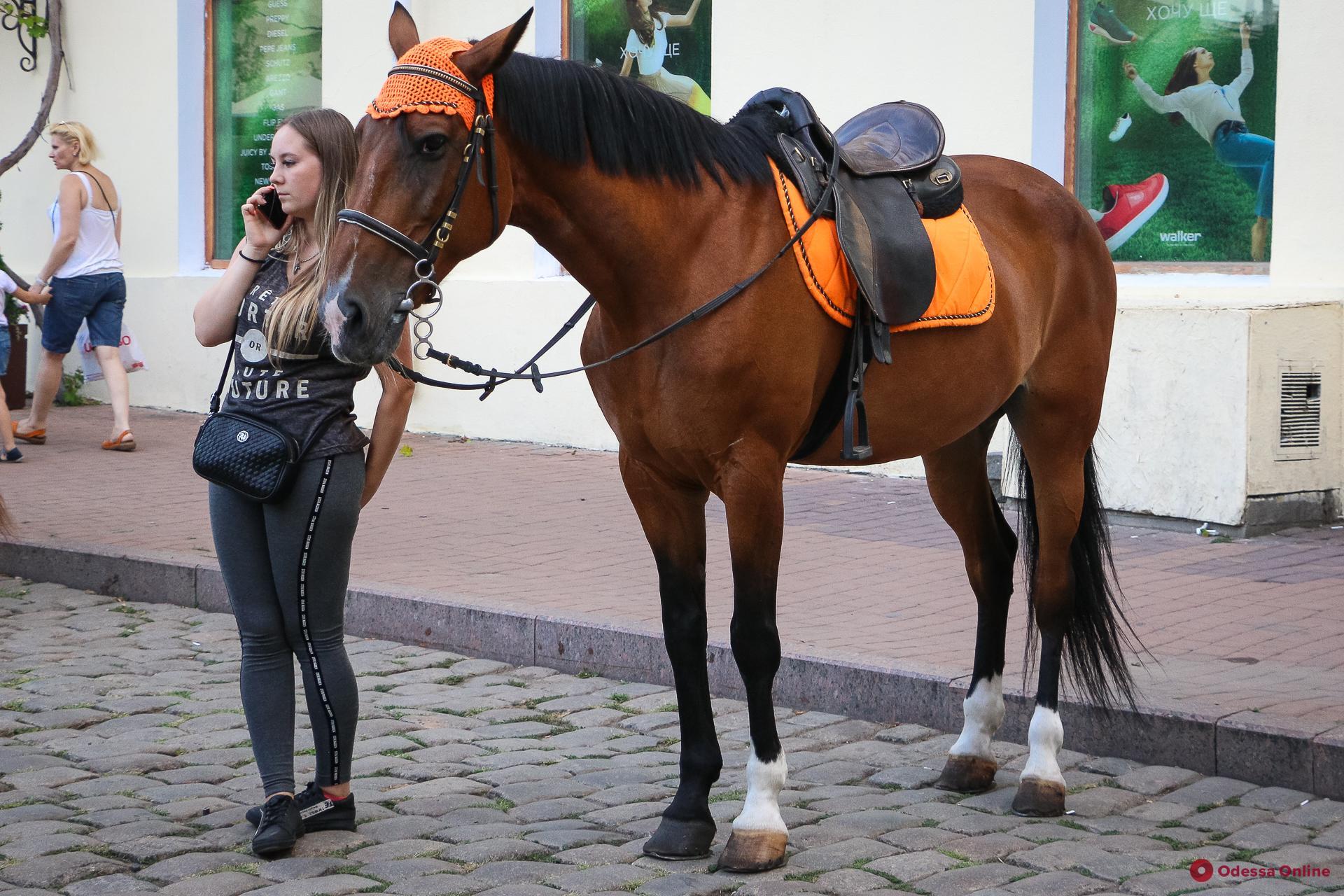 В мэрии проверили условия содержания лошадей с Дерибасовской
