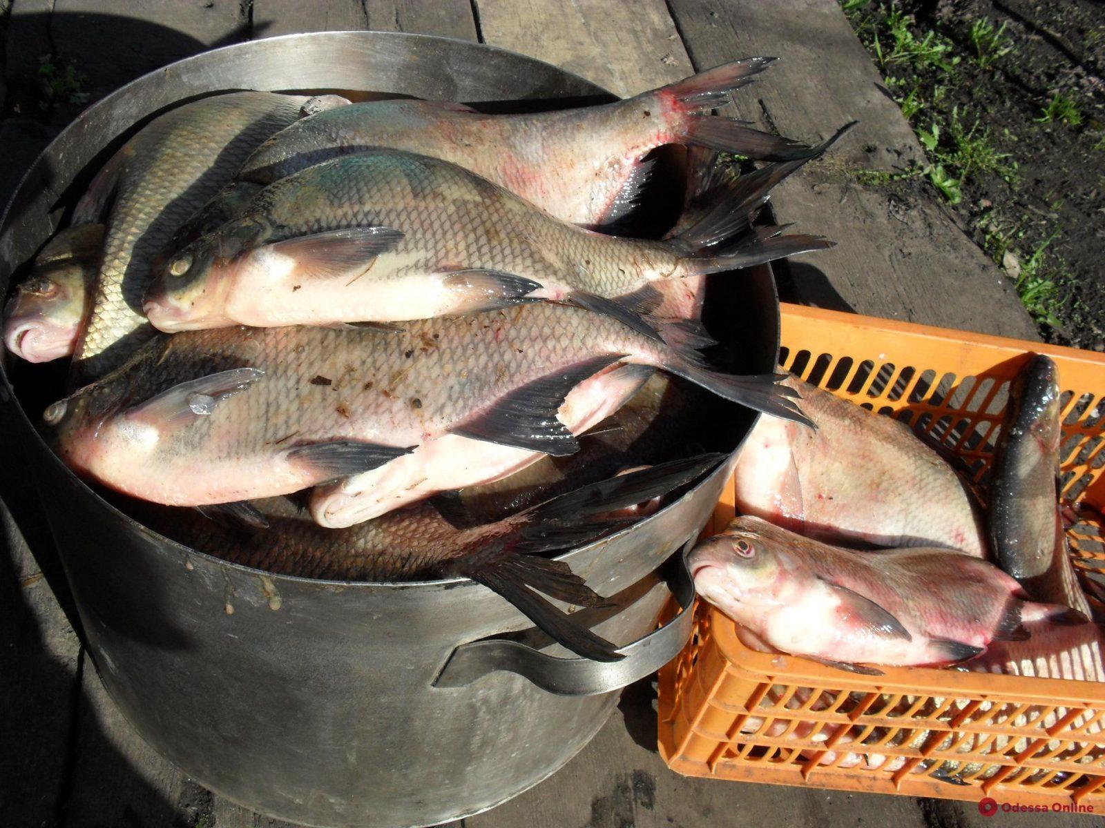 Житель Одесской области хотел незаконно продать 65 килограммов рыбы