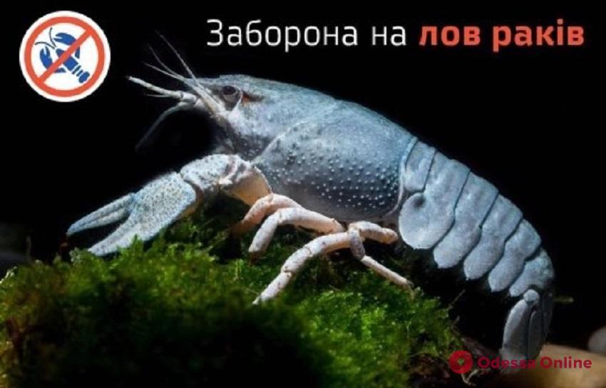 В Дунае с завтрашнего дня запрещают ловить раков