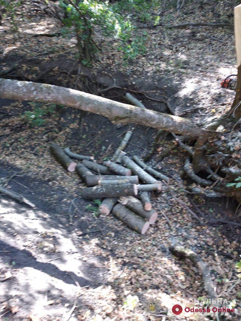 Вырубал деревья и грузил в автомобиль: жителю Одесской области грозит штраф