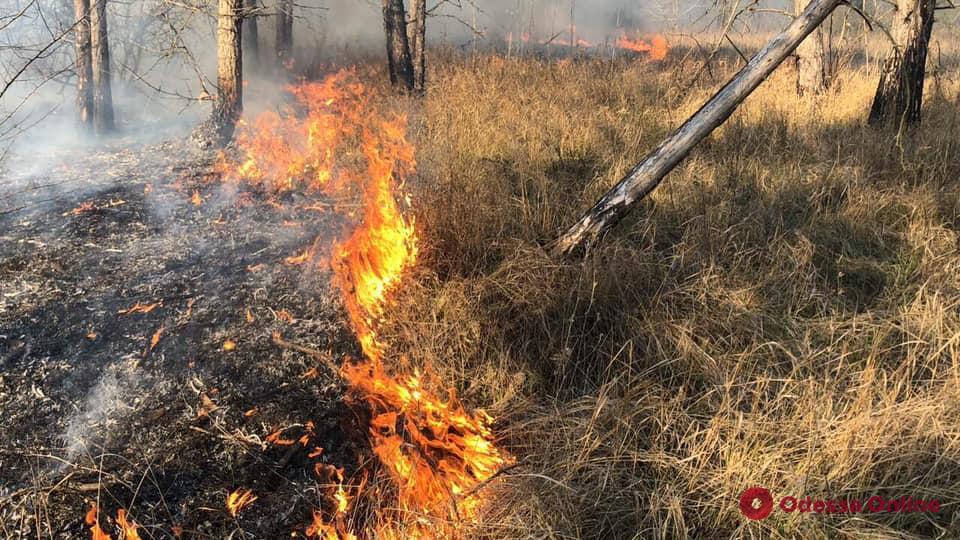 В Одесской области за сутки 26 раз тушили сухую траву и камыш