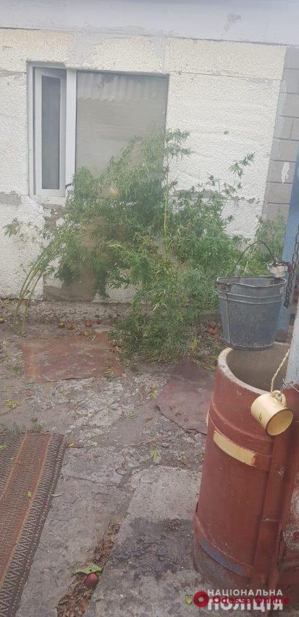 В Одесской области наркоагрария «заложили» соседи