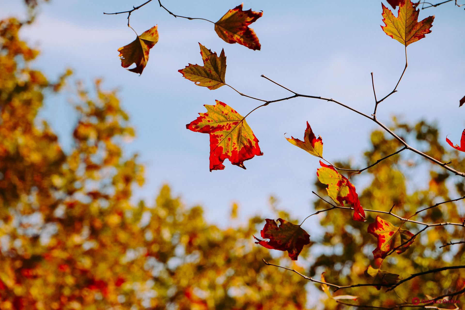 Какая погода ожидает одесситов 6 ноября