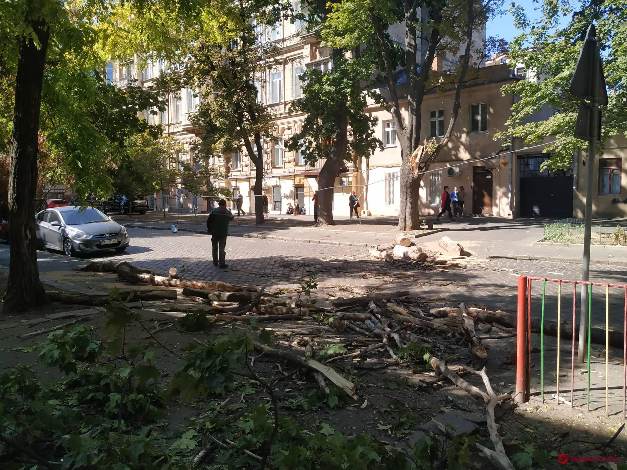 На Дворянской большая ветка рухнула на проезжую часть