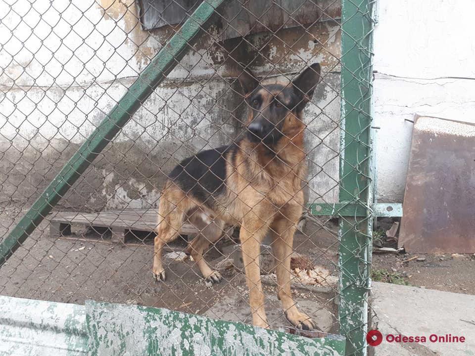 Служебные собаки из законсервированной одесской колонии ищут новых хозяев