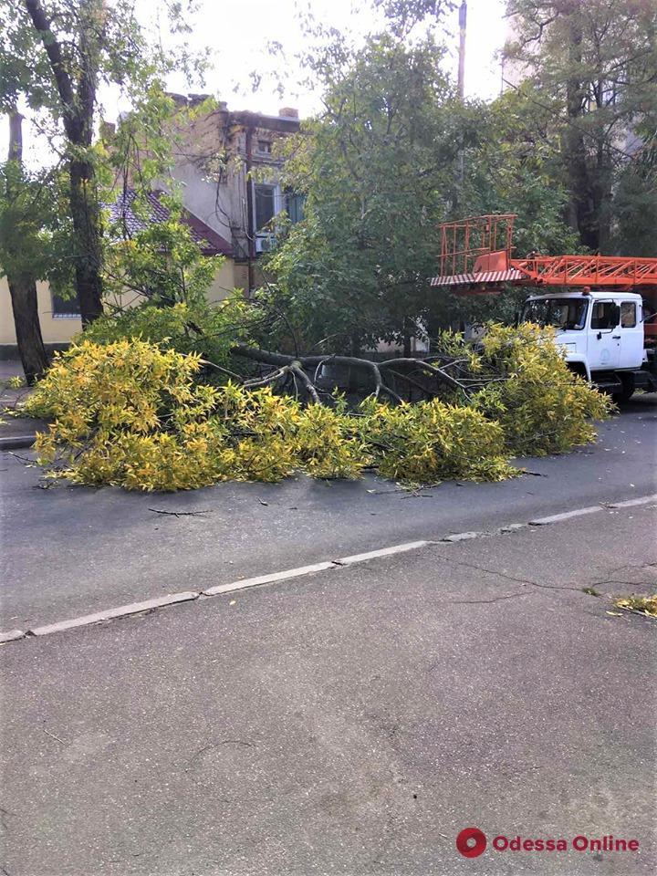 В Одессе сильный ветер повалил пять деревьев