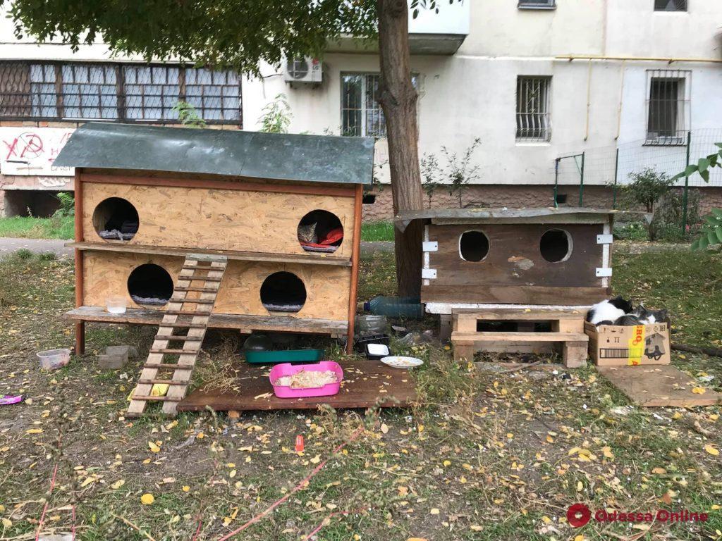 Во дворе на Таирова появились котодомики (фото)