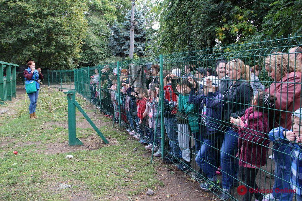 «День малышей»: одесситы выбрали имена для юных питомцев зоопарка