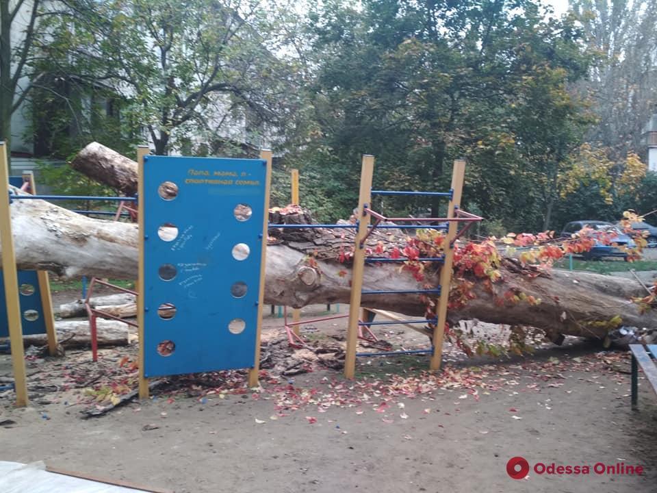 В Одессе на спортивную площадку упало дерево
