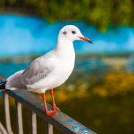 осень парк Победы чайка