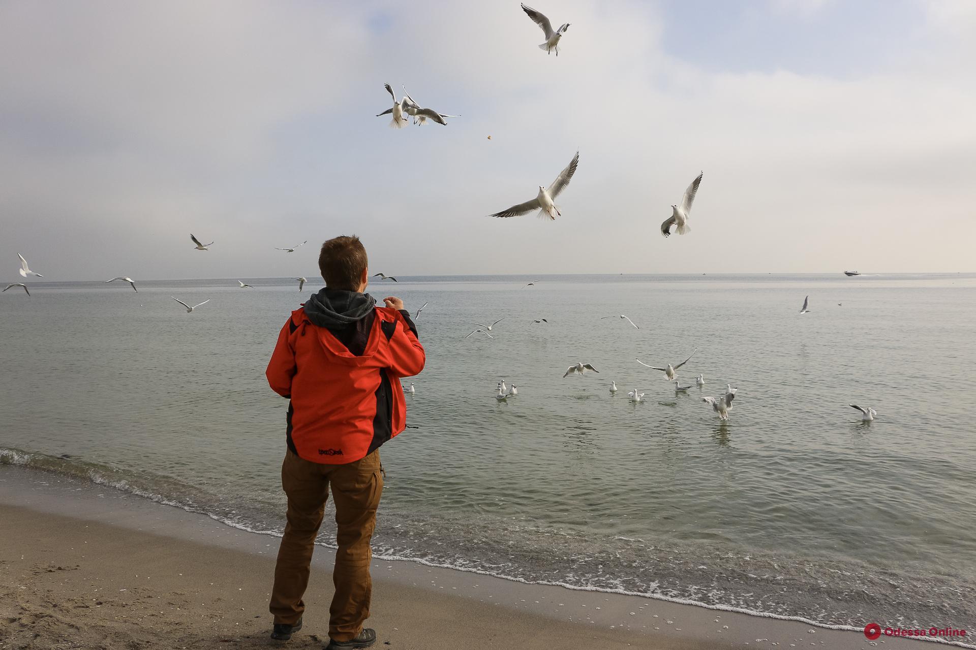 Чайки и холодное одесское море (фоторепортаж)