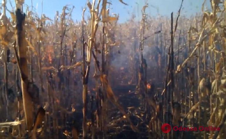 В Одесской области горело кукурузное поле