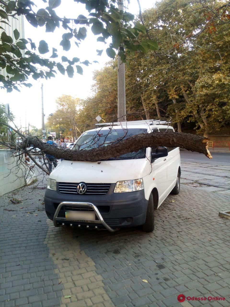 В Одессе ветка упала на машину