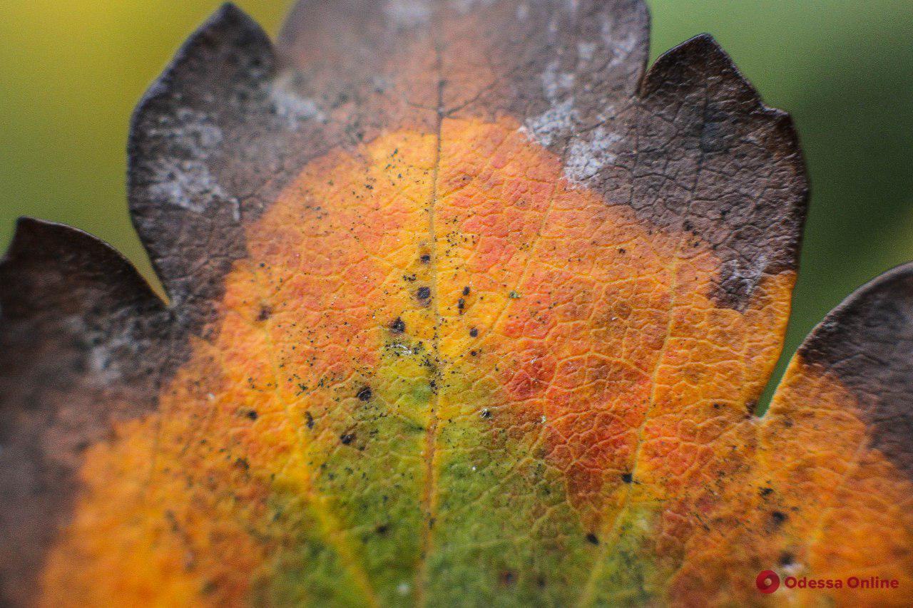 Одесская осень в деталях (фоторепортаж)