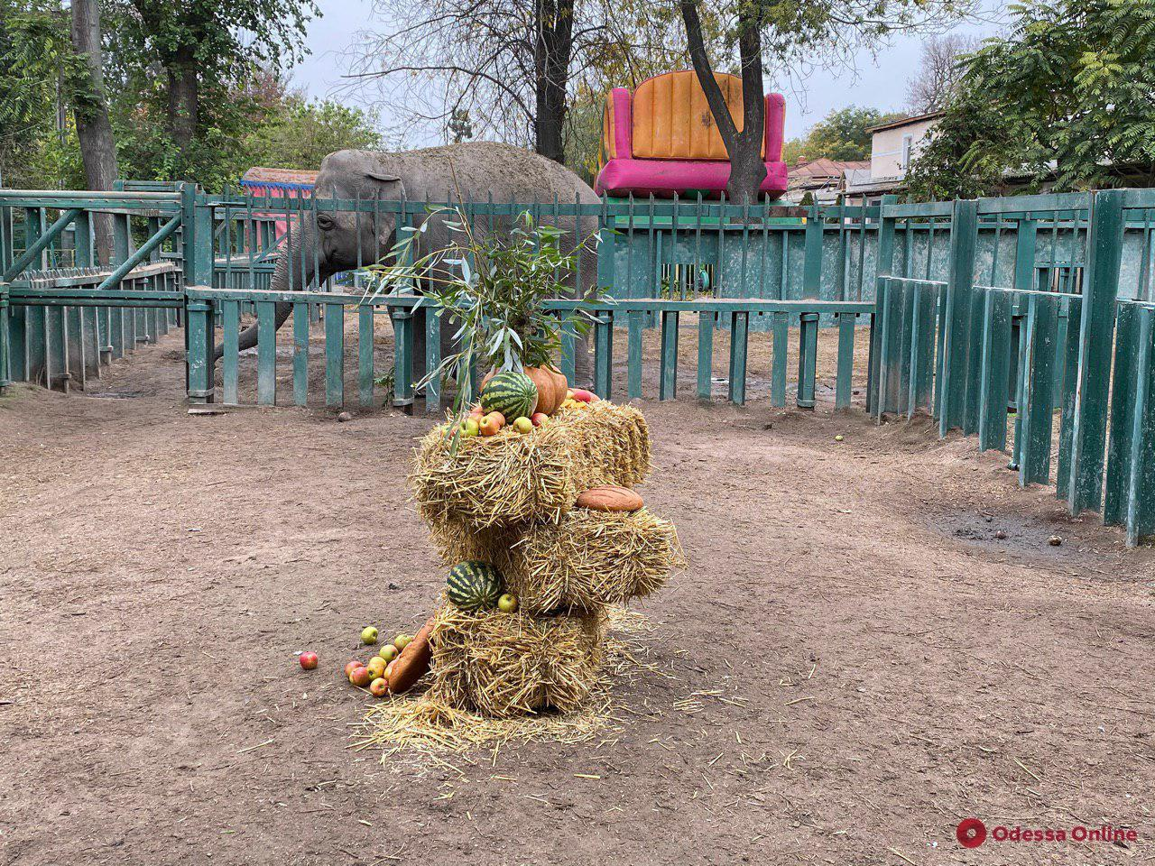 В Одесском зоопарке отметили «День тыквы» (фоторепортаж)