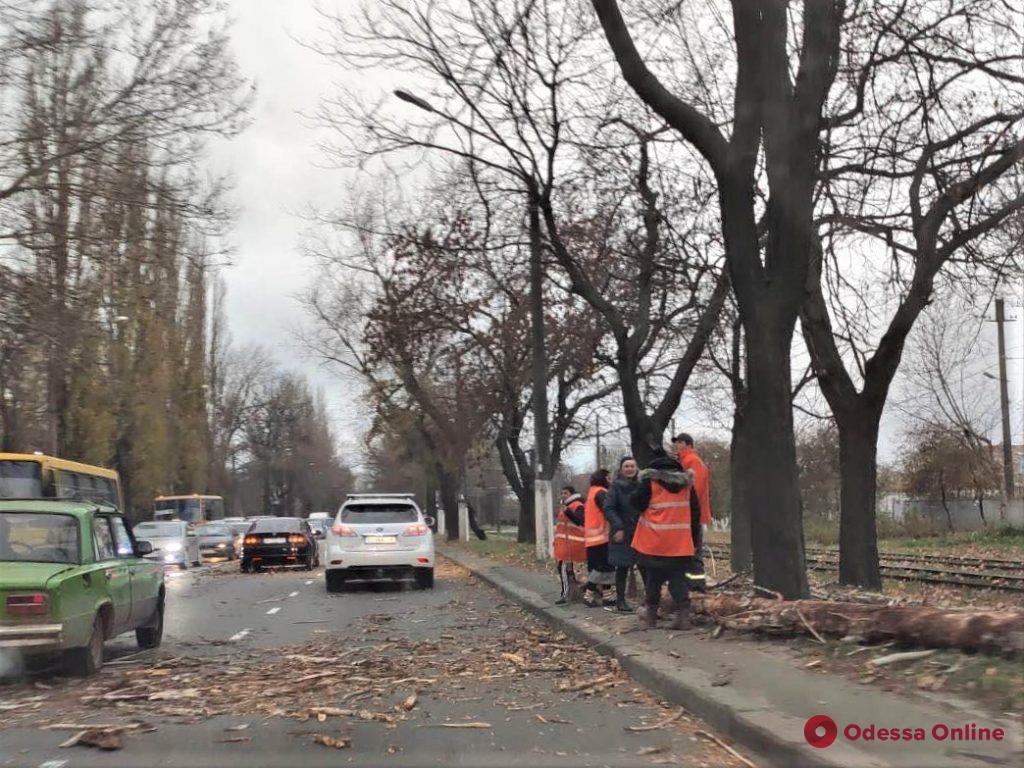 В Одессе сильный ветер повалил 8 деревьев