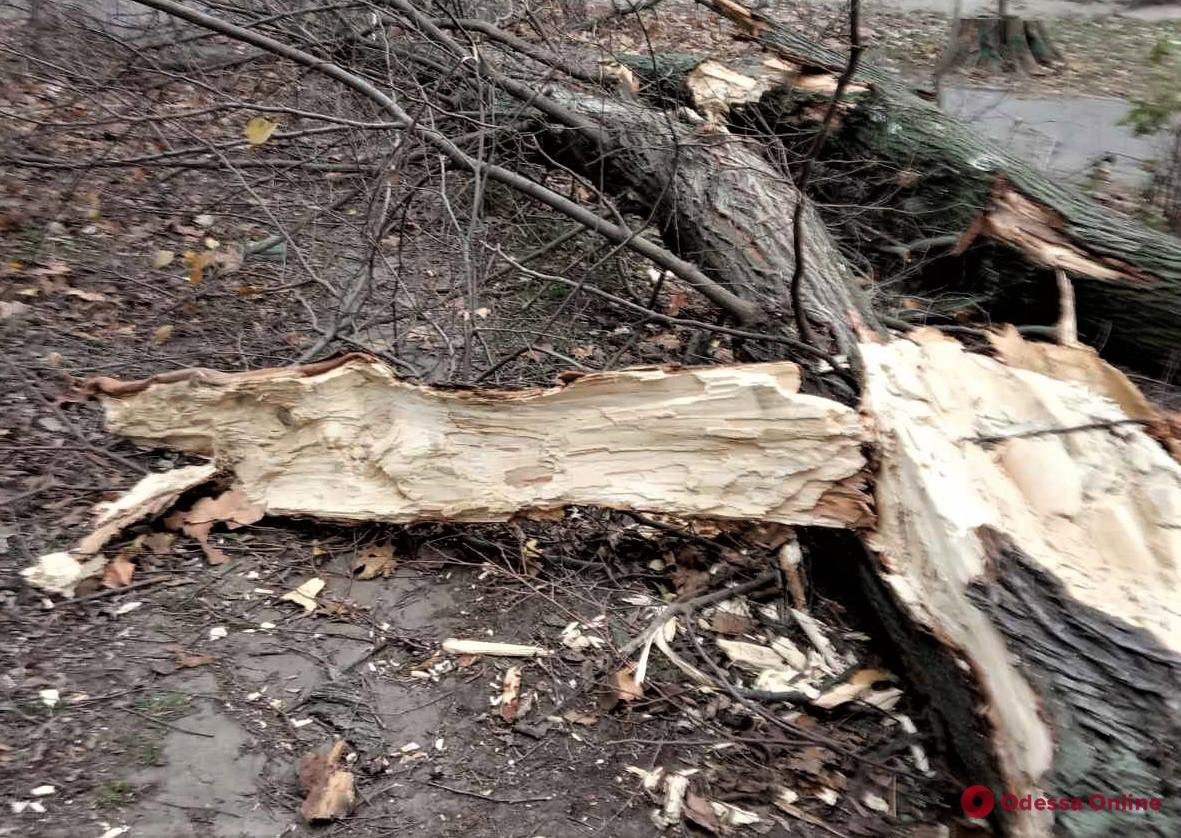 В Одессе из-за шквального ветра рухнули еще 9 деревьев
