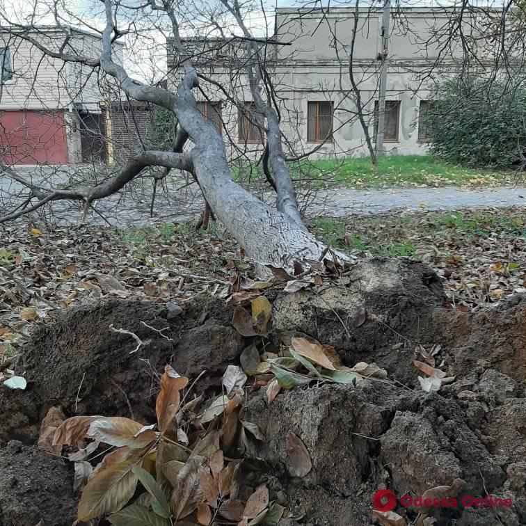 На Дальних Мельницах дерево упало в нескольких метрах от людей (фото)