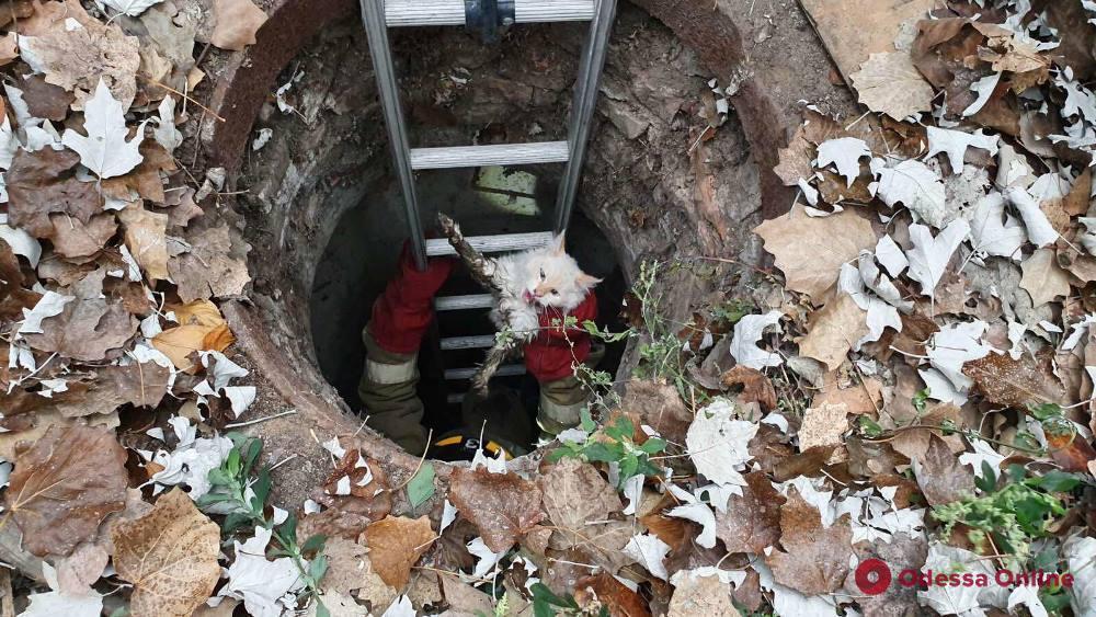 Одесские спасатели вытаскивали кота из канализационного люка (фото)