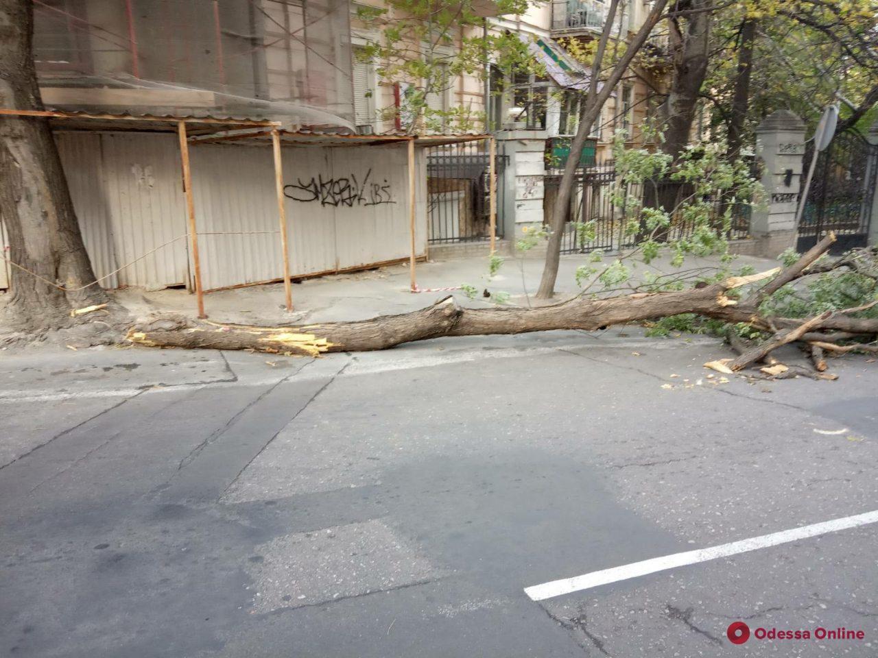 В Одессе сильный ветер повалил четыре дерева (фото)