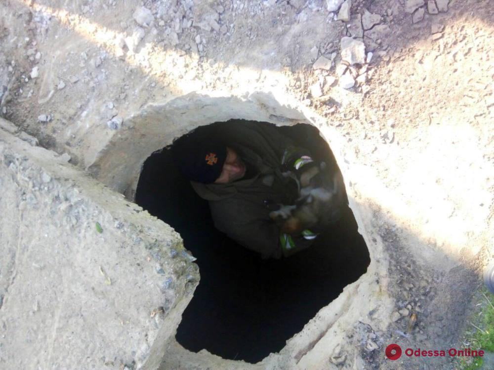 В Теплодаре спасли упавшую в канализационную шахту собаку