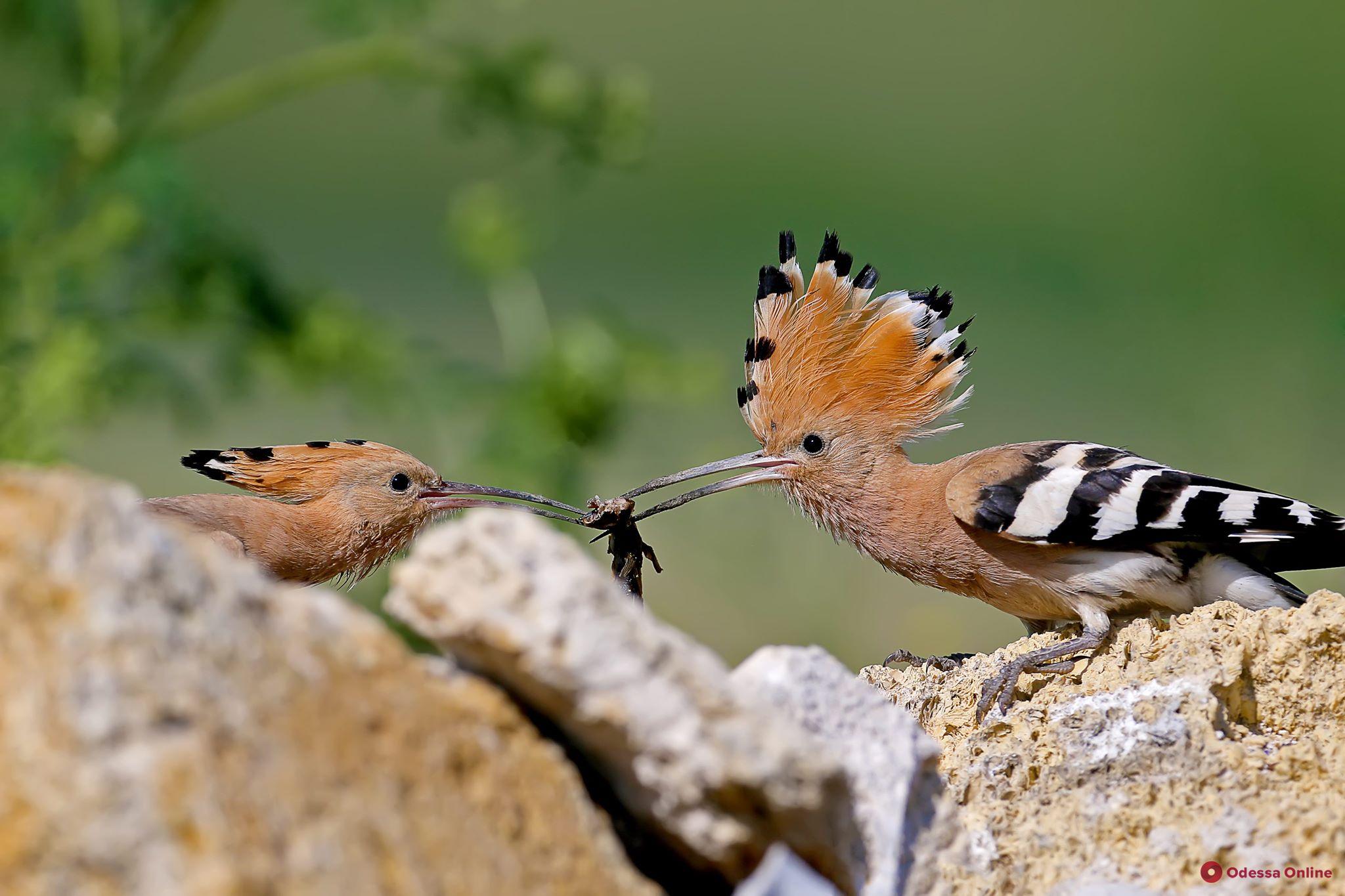 Экстремальные условия, железное терпение, талант и профессионализм: что кроется за красивыми фотографиями дикой природы