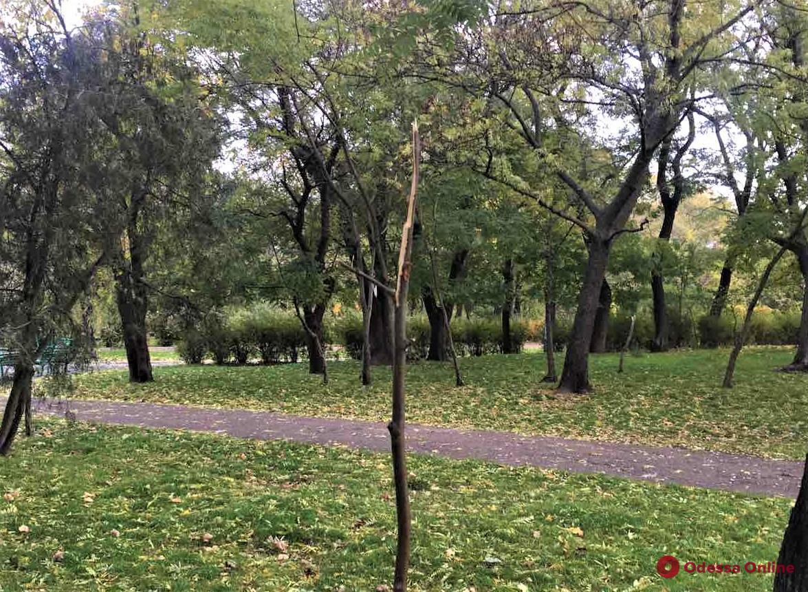 В парке Шевченко вандалы сломали 15 саженцев