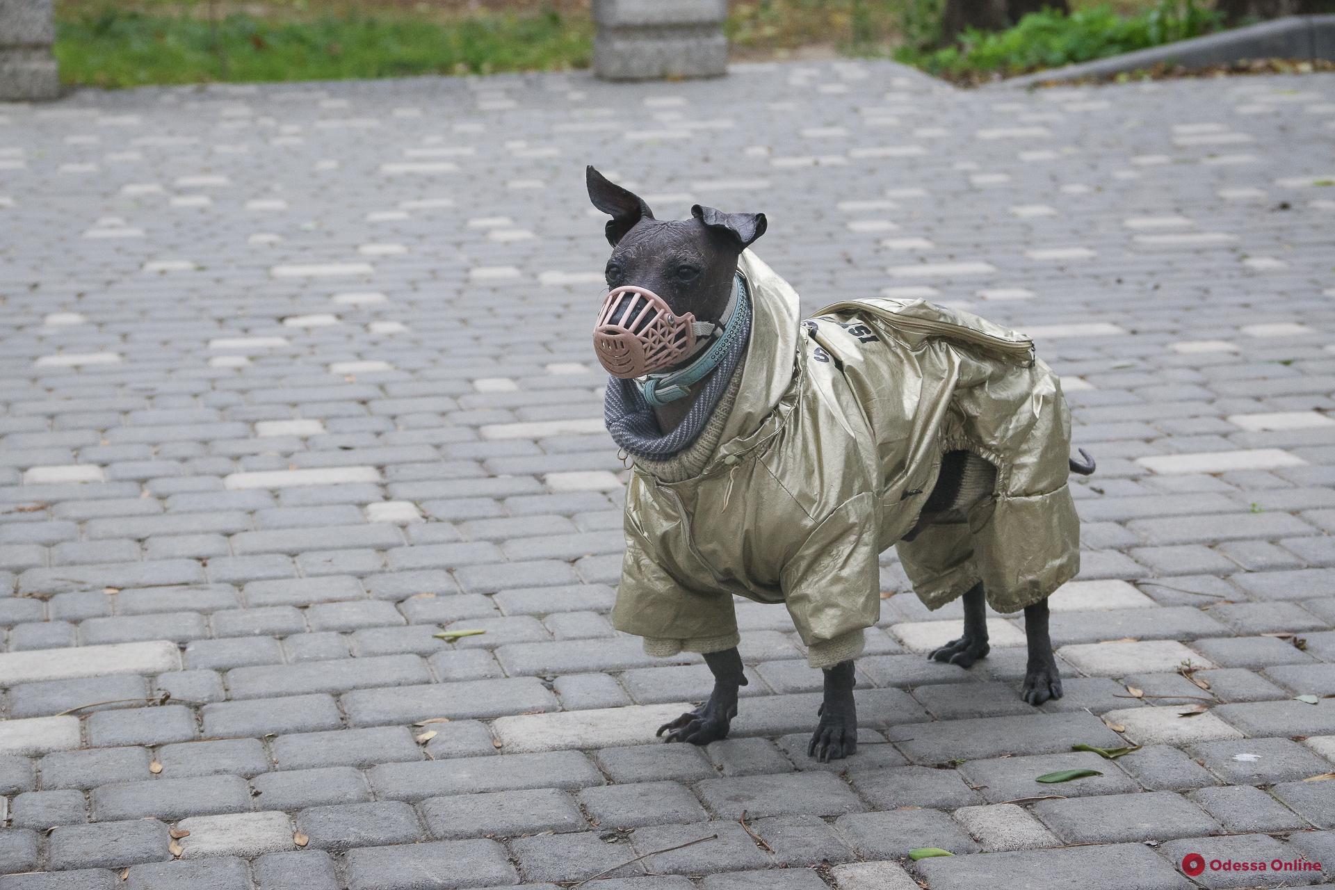 Собачий фэшн: в чем щеголяют одесские барбосы (фоторепортаж)