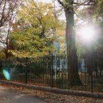 осень французский бульвар
