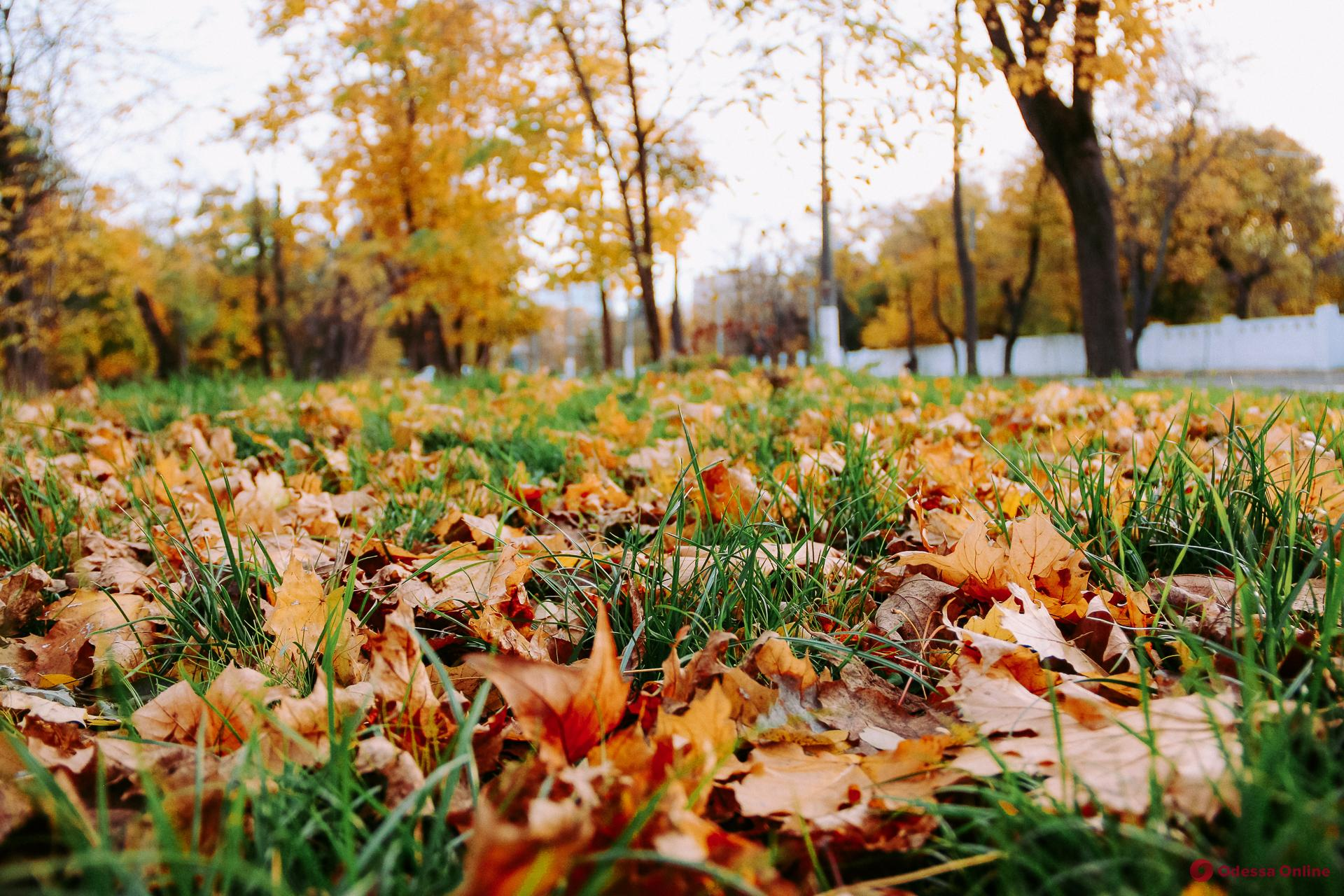 Осень на Французском бульваре (фоторепортаж)