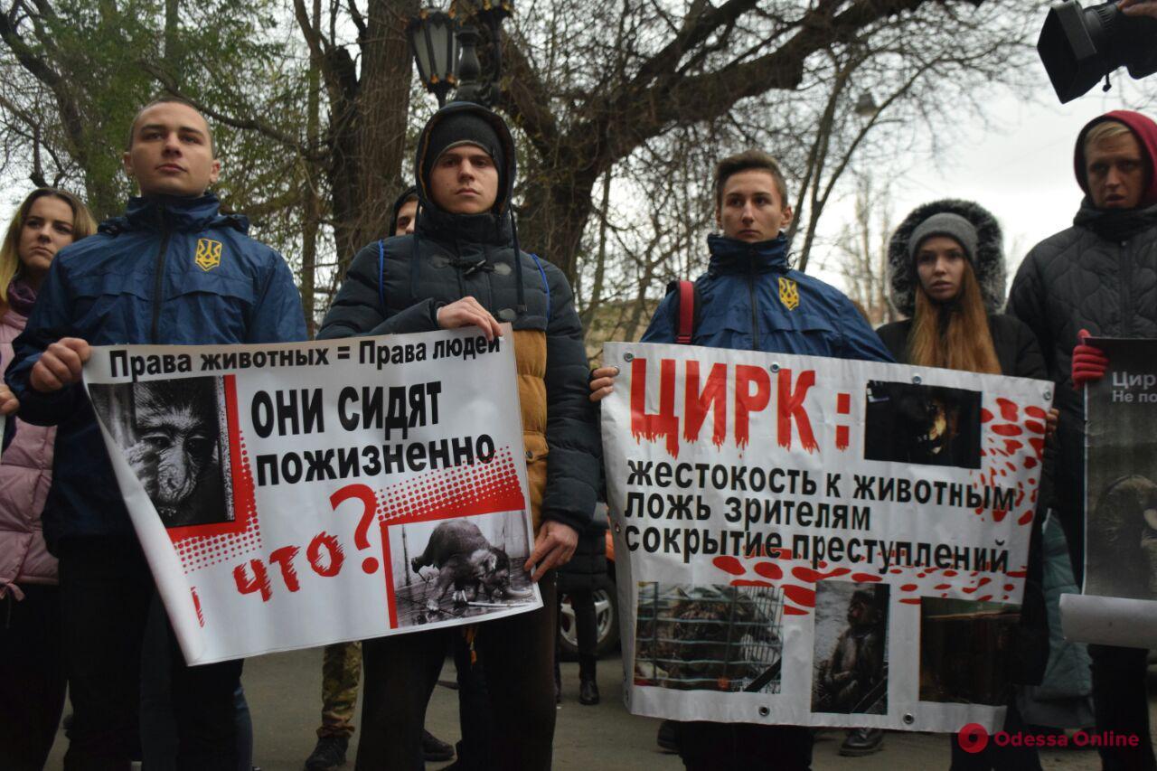 Одесские зоозащитники пикетировали цирк (фото, видео)