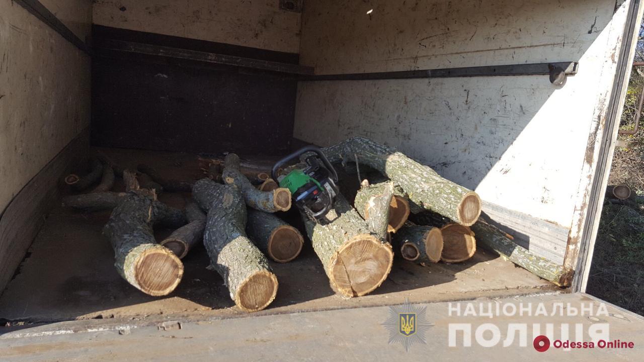 Готовятся к отопительному сезону: в Одесской области поймали лесорубов-нарушителей