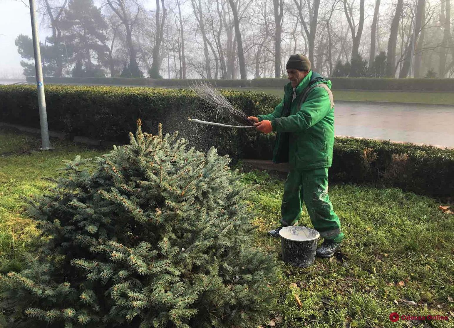 Для защиты от вандалов одесские коммунальщики опрыскивают мелом городские елки