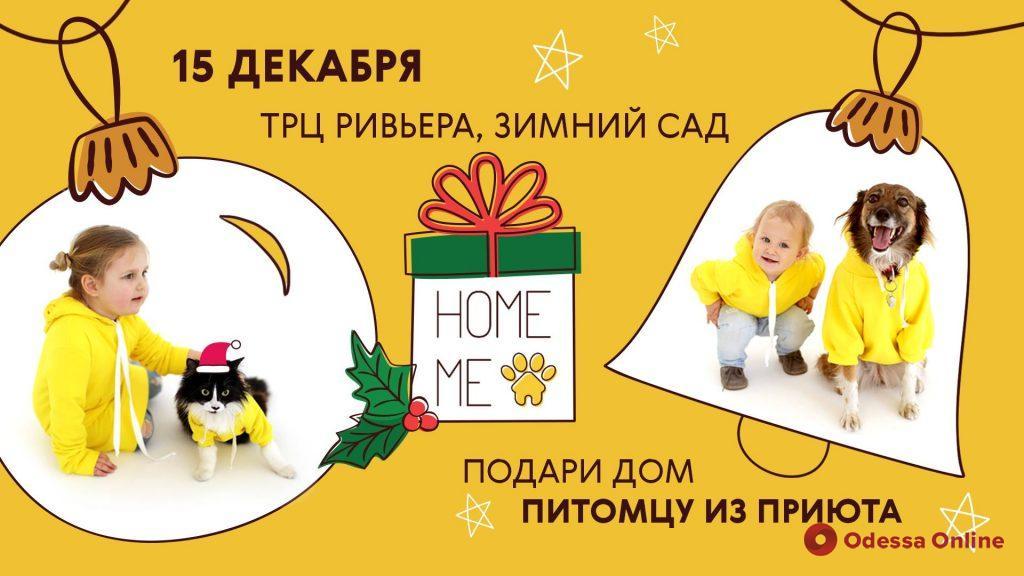 В Одессе снова пройдет фестиваль для животных из приютов