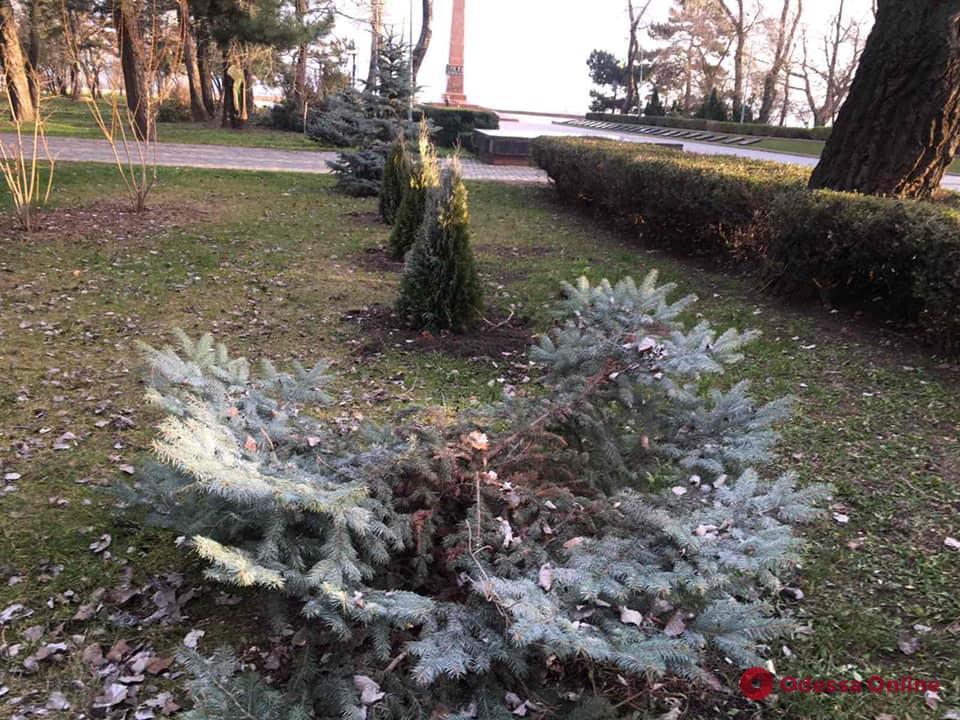 В парке Шевченко вандалы срезали две ели (фото)