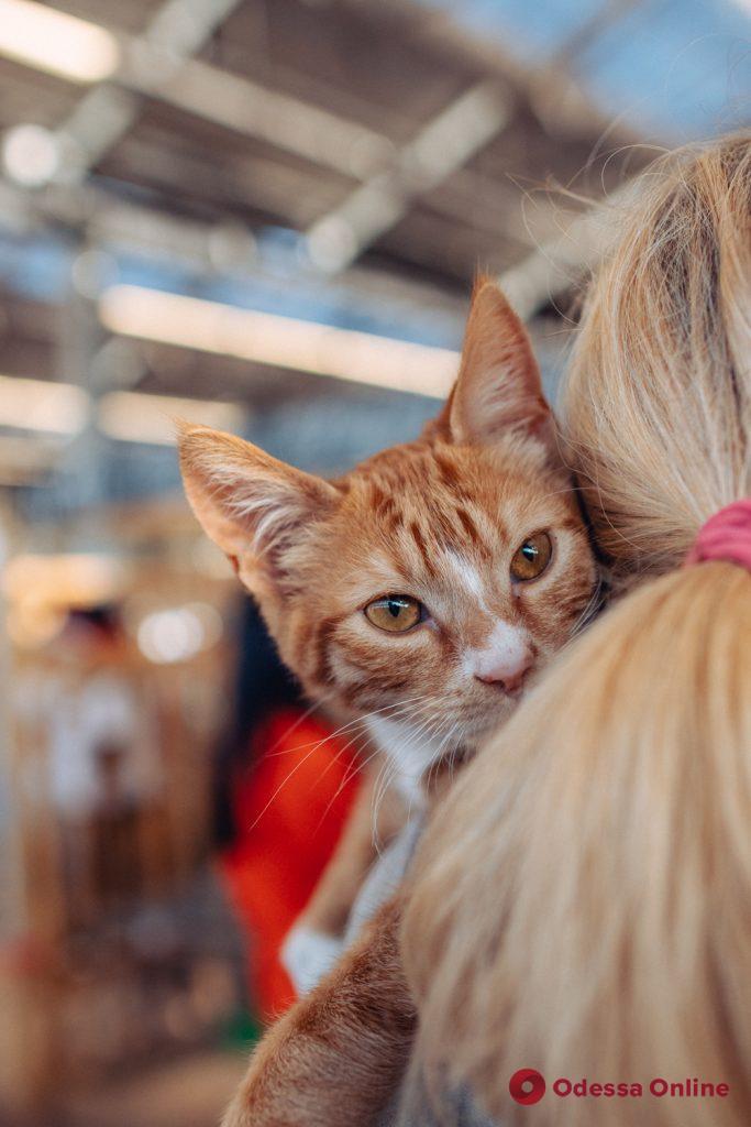 В Одессе на фестивале для животных из приютов 61 питомец обрел новый дом