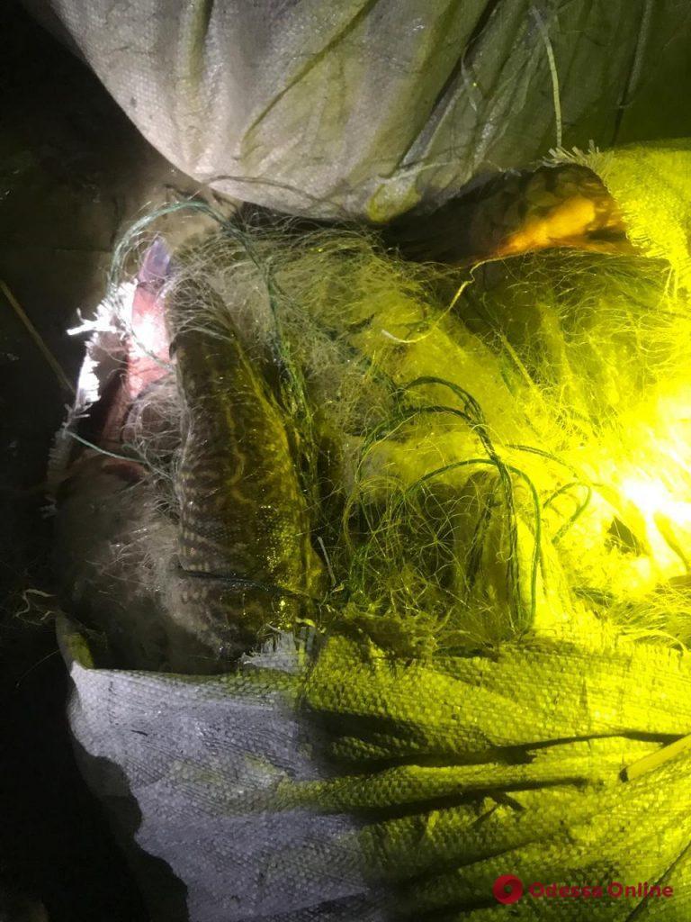 На юге Одесской области поймали браконьеров с богатым уловом (фото)