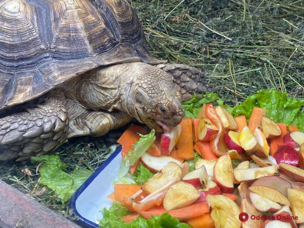 В Одесском зоопарке появились пятимесячный леопард и шпороносные черепахи (фото, видео)