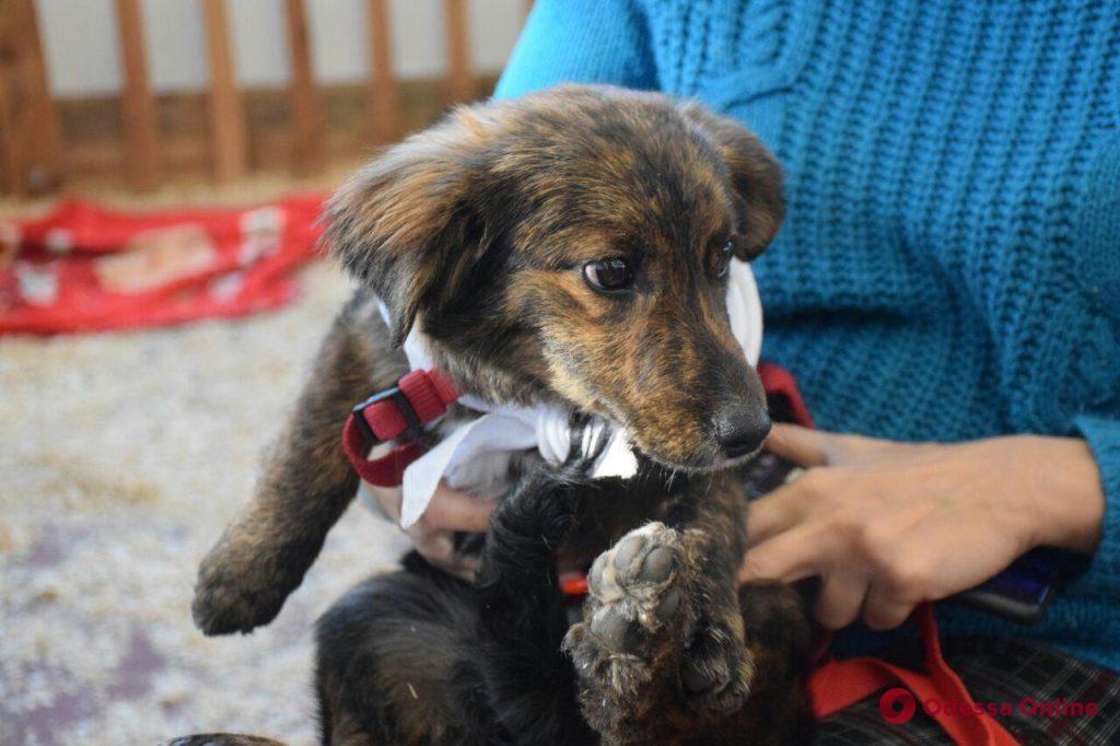 Home Me: в Одессе проходит пятый фестиваль для животных