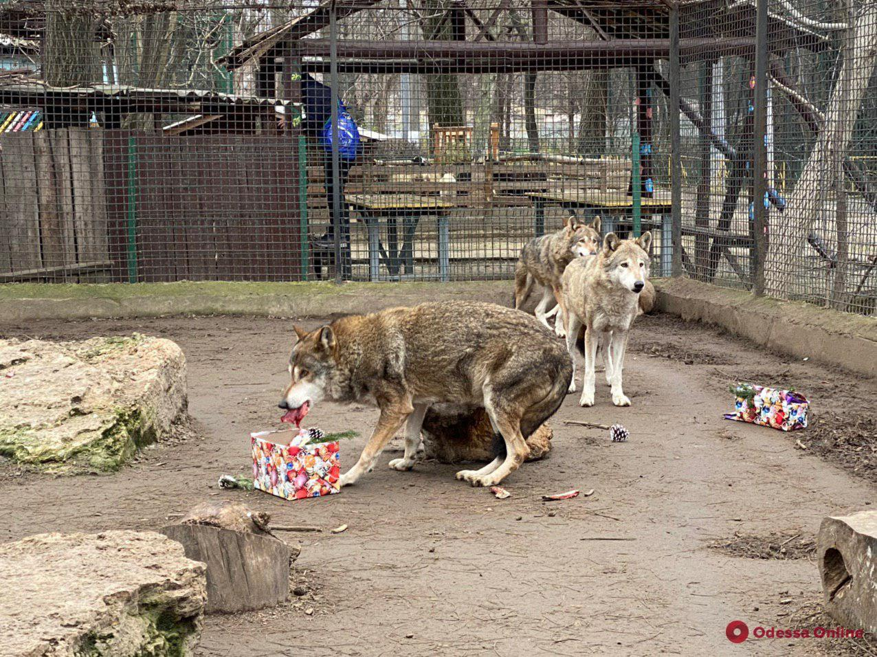 Дружелюбные кролики, ласковые зебры и любопытные мунтжаки: обитатели одесского зоопарка в преддверии Нового года