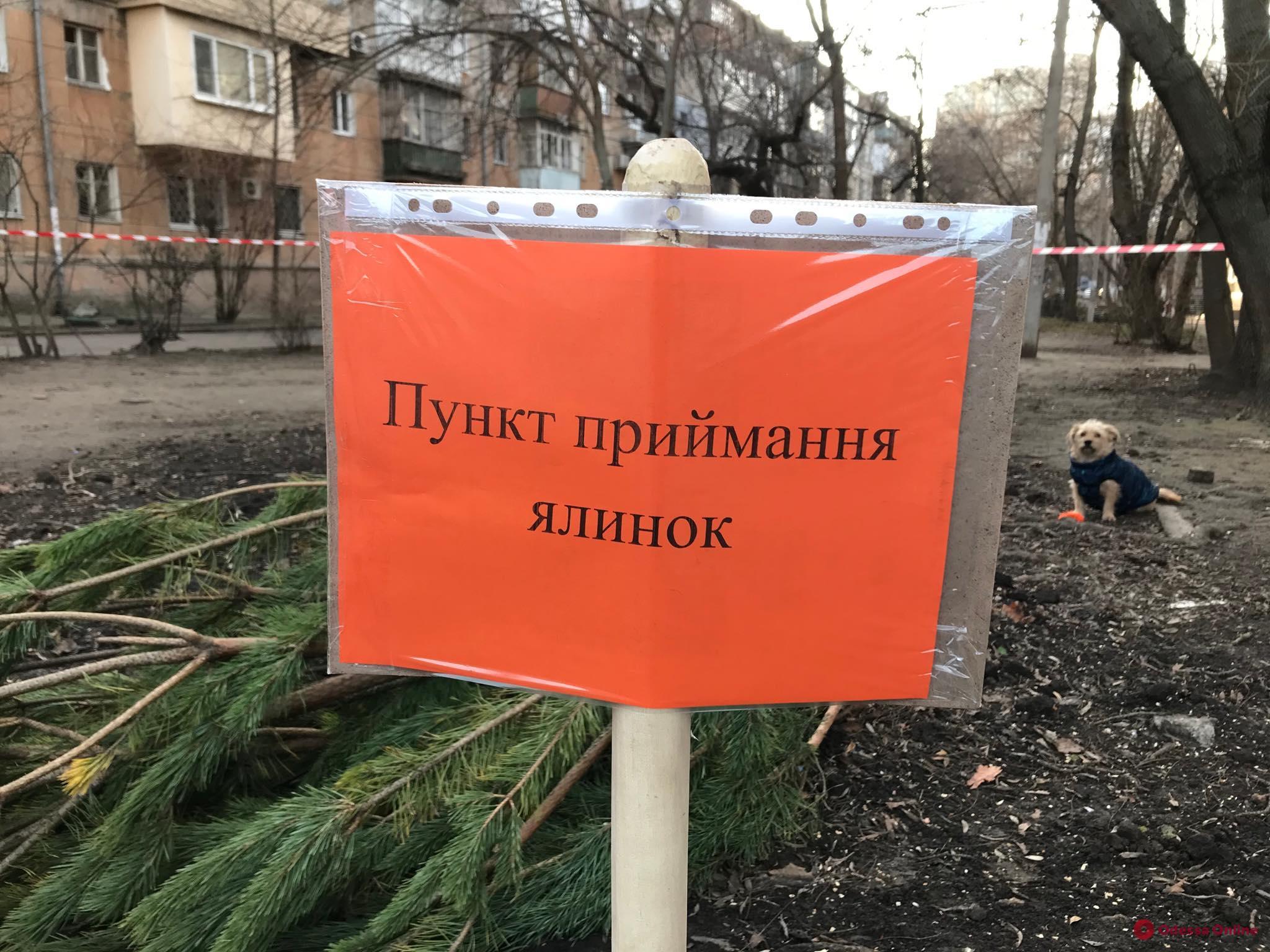 Одесса: обнародованы адреса пунктов приема елок