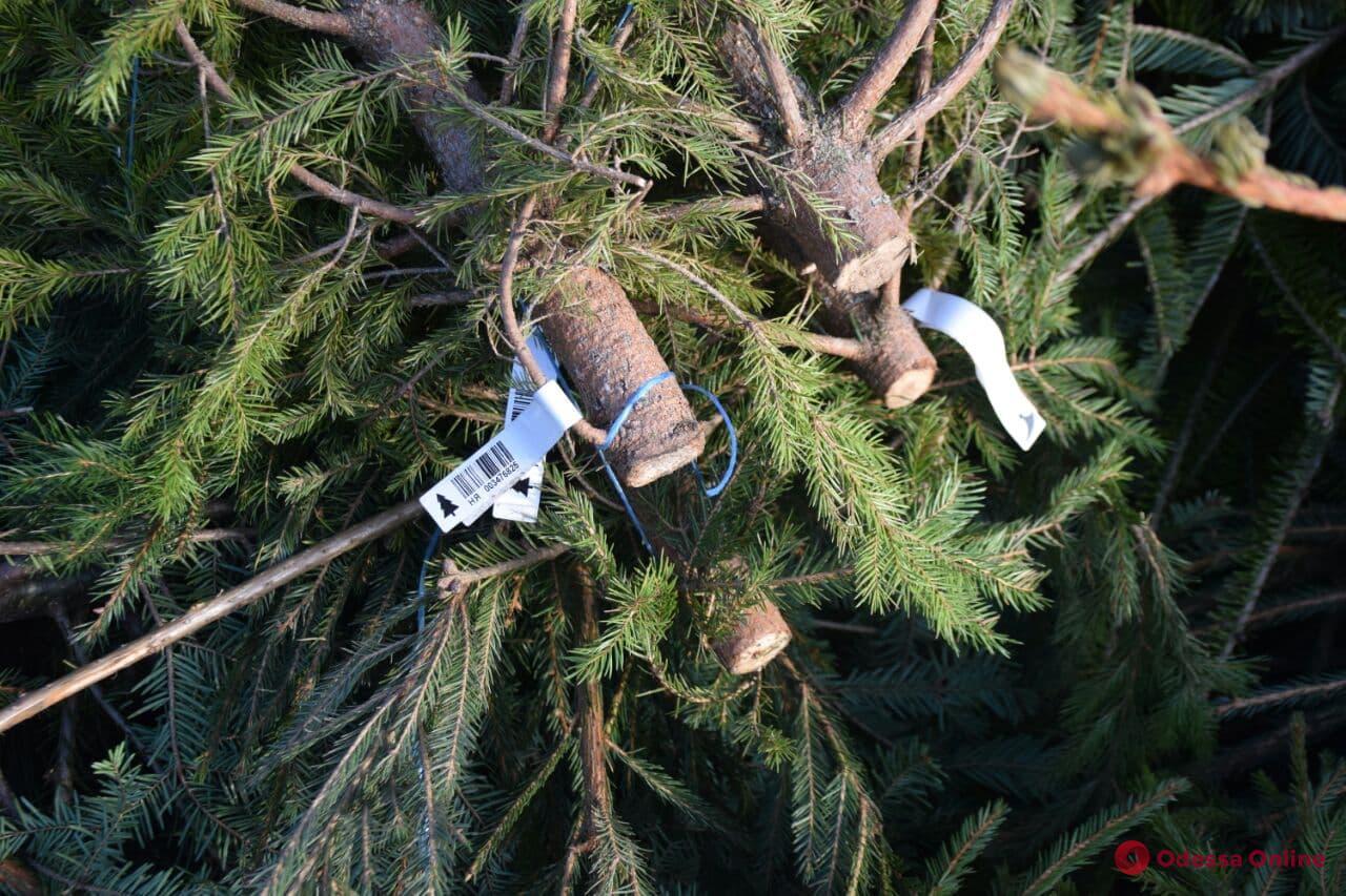 Одесситы получили 20 тысяч конфет за сданные на переработку елки