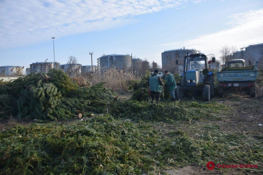 В Одессе начали перерабатывать тысячи брошенных предпринимателями елок (фото)