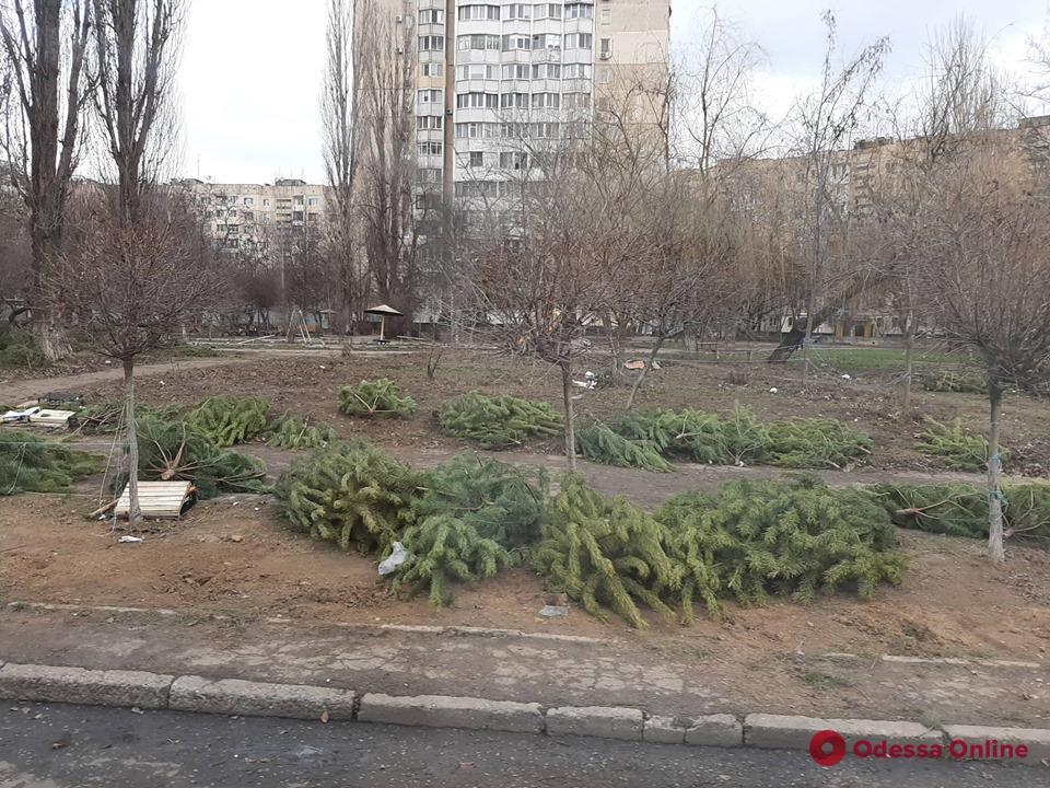 После новогодних гуляний Одесса превратилась в «кладбище» елок и сосен (фото)