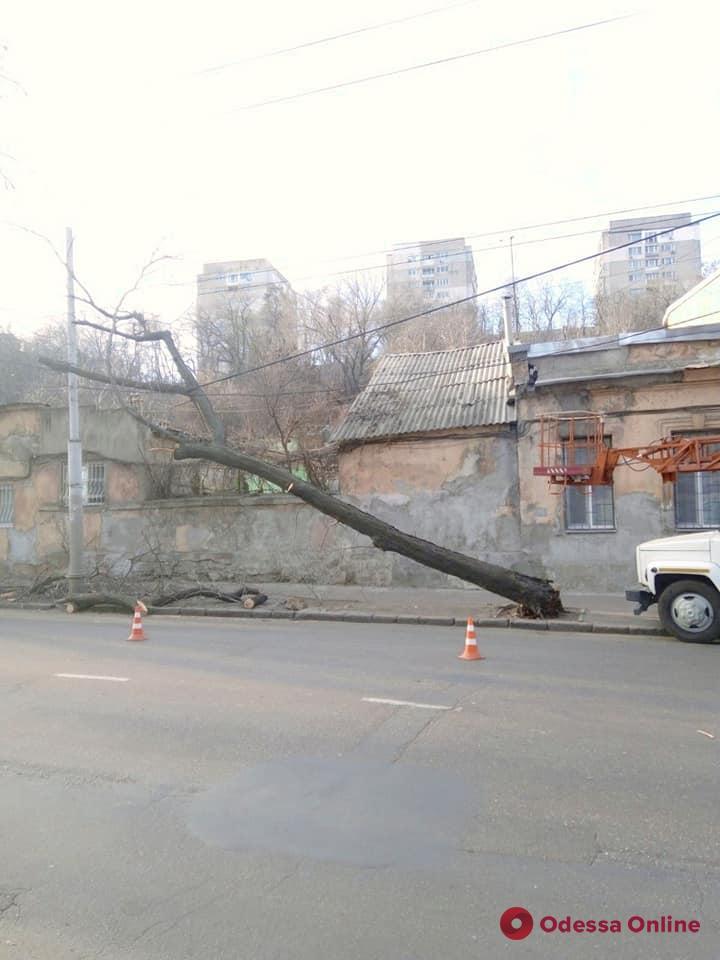 В Одессе сильный ветер повалил деревья