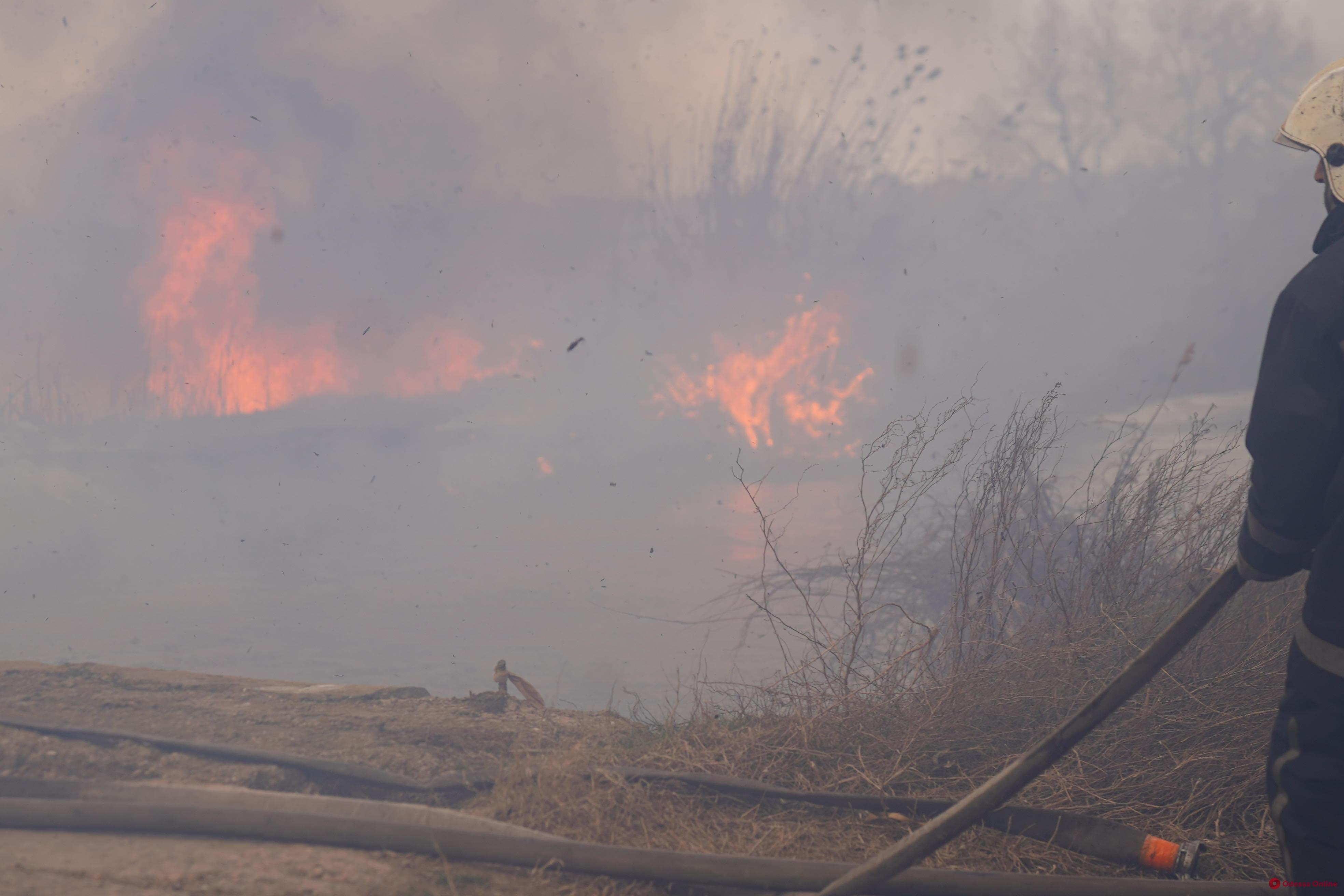 В Одессе на полях орошения на большой площади горит камыш (фото, видео, обновляется)
